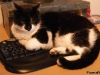 scampers-on-keyboard-3